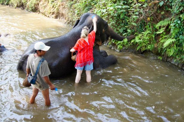 Patara Elephant Sanctuary_Chiang Mai