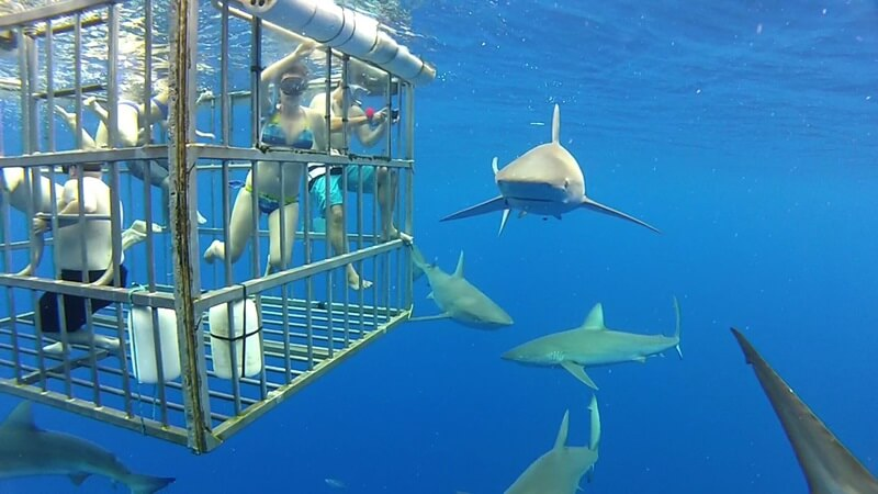 Best Water Sports: Cage Diving